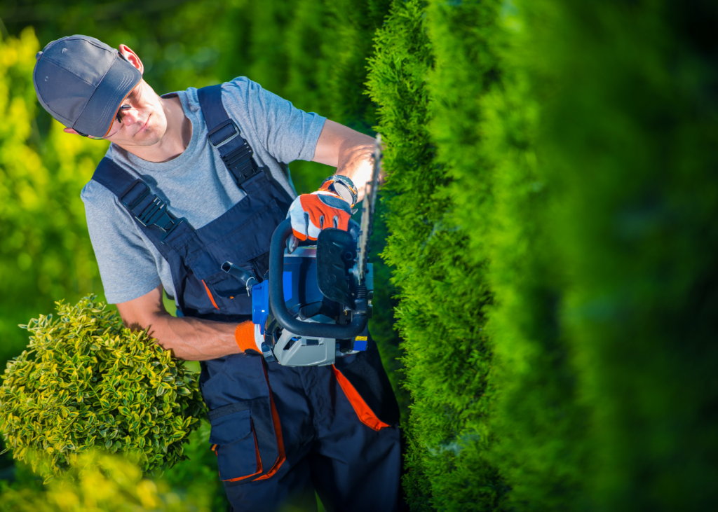 evergreen hedge for curb appeal